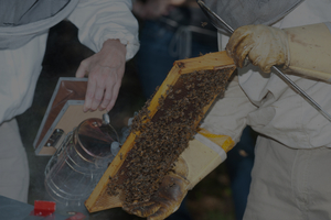 Learn how to 'read' a frame of bees with the Middlesex County Beekeepers Association