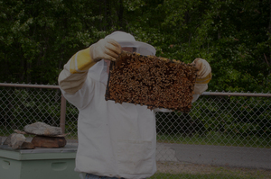 Learn how to tell if your hive is queen-right... We'll teach you how.
