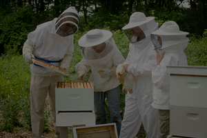 Learn Beekeeping with MCBA!