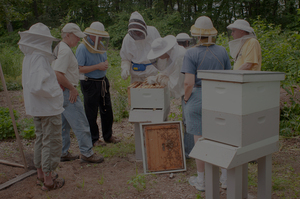 Inspecting Hives is an important task - learn how with MCBA
